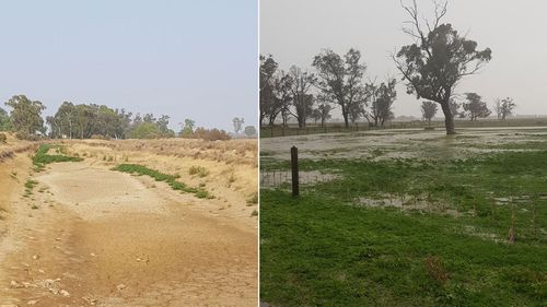 Relief from Australia's crippling drought came 12 months too late for the Dalitzs.