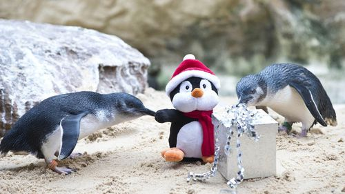 Sydney Aquarium is open on Christmas Day