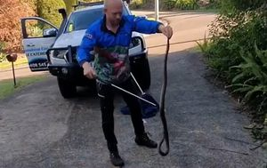 Grandson drags deadly snake from grandmother's garage before catcher arrives