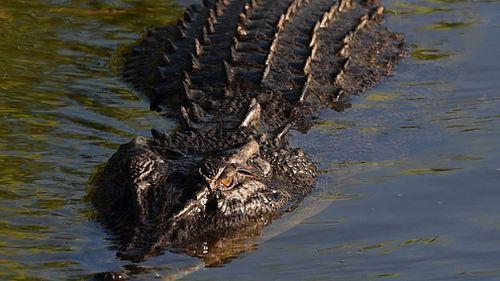 NT government backs croc-hunting safaris