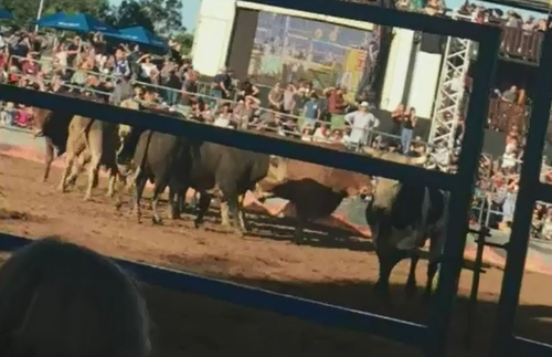 Brisbane's Eatons Hill Hotel owner Rob Comiskey said it was distressing that bulls were injured.