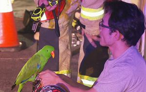 Parrot rescues sleeping owner as fire tears through Brisbane house