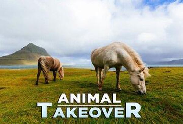 Animal Takeover