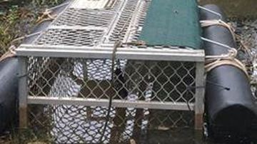 The fine for the theft could be as high as $77,500 if a croc was inside the trap.