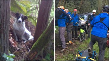 Searchers have praised a loyal dog that stayed by it's owner's side and barked until help arrived.