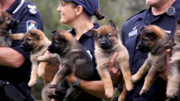 9RAW: Queensland police need help naming pups