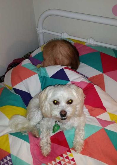 Macy and Archie, a Maltese cross poodle