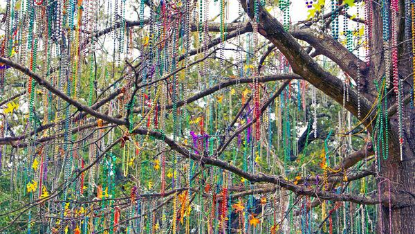 Tree covered in beads for Mardi Gras in New Orleans