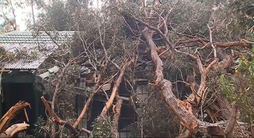 Clean-up begins for SA after destructive winter storm