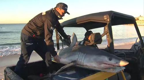 Lifeguards at the famous beach were called to remove the animal. Picture: 9NEWS.