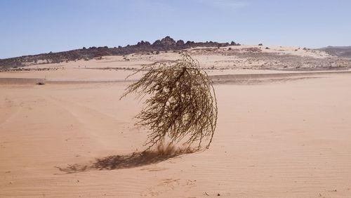 Tumbleweed rolling across desert