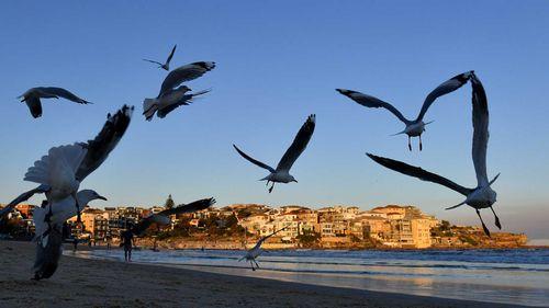 Seagulls flying over Sydney's Bondi Beach.