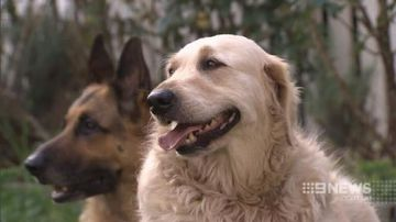 Brisbane dog saved from death row