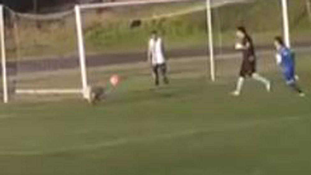 Dog stops ball inside football penalty area