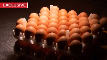 How chicken eggs are helping to prevent another horror flu season