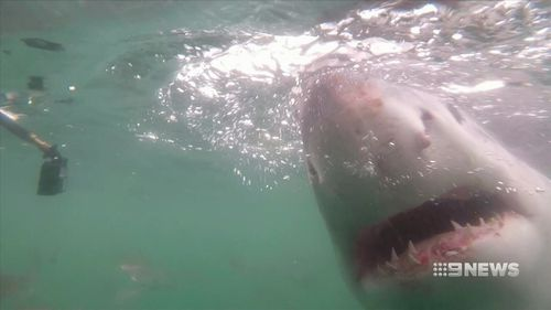 The Federal Government has accused the state government of not doing enough to prevent shark attacks. (9NEWS)