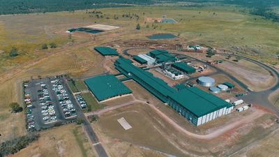 Hundreds of NT jobs at risk as AACo shelves Darwin abattoir