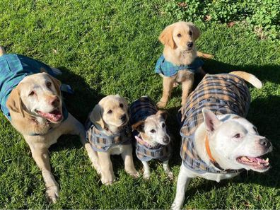 Sophie (centre left) with other pups at the Eden Ark Private Rescue and Rehome in Victoria.