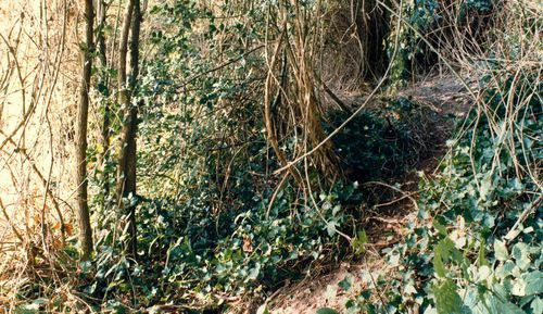 The bodies of Karen Hadaway and Nicola Fellows were found, in a woodland den in an overgrown area in Wild Park on the South Downs, near Brighton.