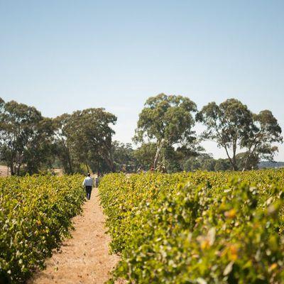 3. Grant Burge Wines, Barossa Valley, SA