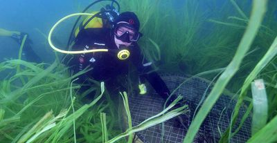 "Another contender for the title of ""world's oldest organism"" is a giant bed of seagrass in the Mediterranean Sea. The precise age of the 14km-wide patch of Posidonia oceanica isn't known — it could be as young as 12,000 years, or as old as 200,000 years. Scientists believe it's likely to be at least 100,000 years old. (Boris Horvat/AFP/Getty Images)"