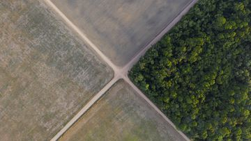 A fragment of Amazon rainforest stands next to soy fields in Belterra, Para state, Brazil. (AP Photo/Leo Correa, File)