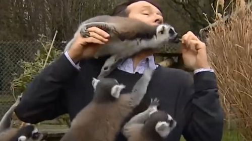 He was constantly interrupted by the animals antics. (BBC Look East)