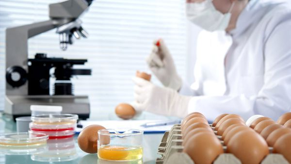 Dos And Donts From Food Safety Experts What They Never Eat And
