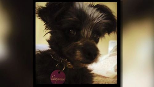 Cupcake was adopted out in Adelaide.