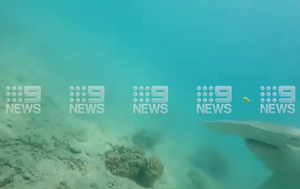 Diver fights off hammerhead shark with camera on Queensland reef