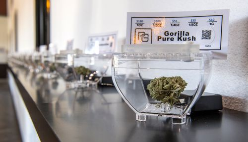 Gorilla Pure Kush is just one of the many varieties of marijuana for sale at the Santa Ysabel Smoke Shop and Dispensary