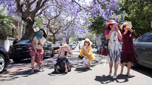 Local and international visitors photograph with their smart phones on McDougall Street in the north Sydney suburb of Kirribilli. (Getty)