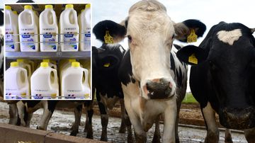 Woolworths' 10c milk levy to help farmers