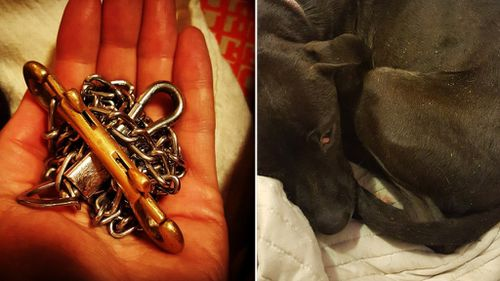 The chain found attached to the dog. (BarkPost/Facebook/Jennifer Williams)