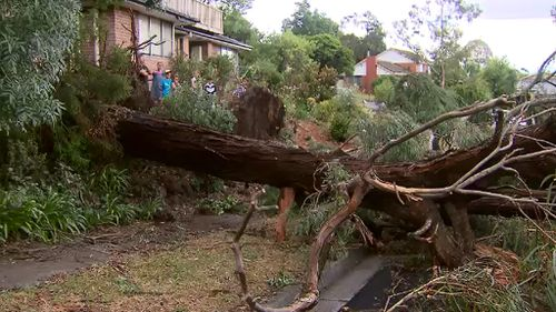 The Bureau of Meteorology warns possible evening thunderstorms may become severe. (9NEWS)