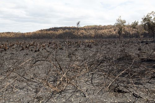 Burnt-out bushland is seen in Peregian Beach. (AAP Image/Rob Maccoll)