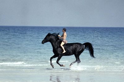 Beloved by generations, the story of The Black Stallion dates back to Walter Farley's classic kids' book series from the 1940s up until the 1980s. This much-loved film version captured the journey of the wild Arabian stallion who becomes a race-winning legend, despite a last-minute injury. Gotta love 'the big finish'!