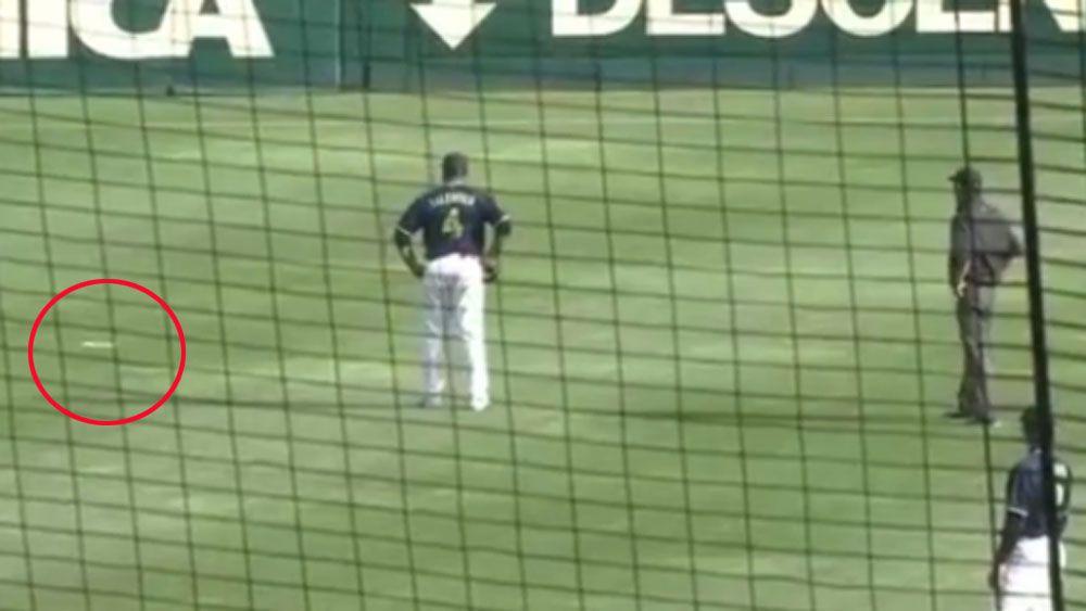 Flying fish stops baseball game