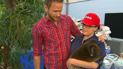 Koala rescue volunteers in need of counselling after horror scenes