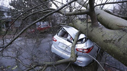 Car crushed by tree in Nashville, Tennessee