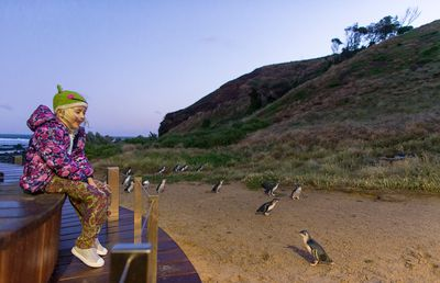 Watch the Little Penguin Parade on Phillip Island, Vic