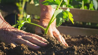 How to keep your plants alive despite harsh water restrictions