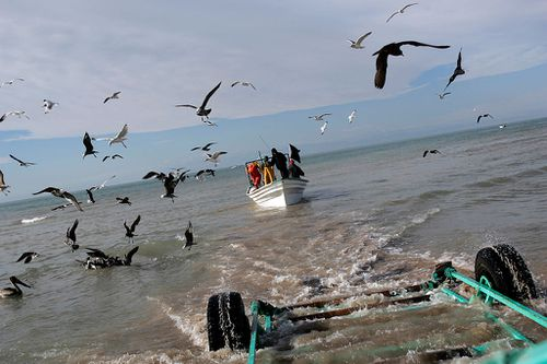 A fishing boat pulls away from a trailer that has brought it to the water, in Golfo de Santa Clara, in Baja California, Mexico. Fishermen from this area fish in the Sea of Cortez which is the habitat of an endangered porpoise, La Vaquita.