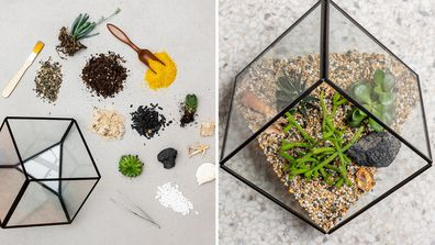 A succulent delivery service exists for people who can't keep plant alive