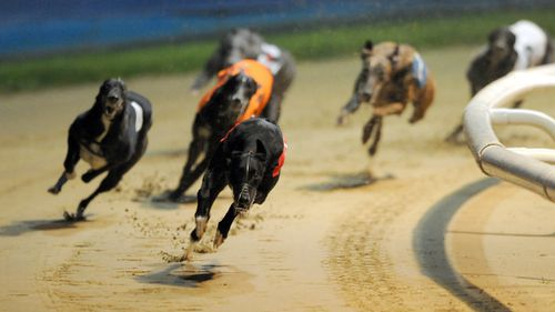 The Greyhound Racing NSW board has stepped down amid fallout of the live-baiting scandal. (AAP)