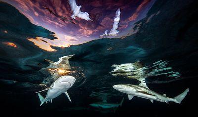 "Underwater Photographer of the Year: ""Sharks' Skylight"""