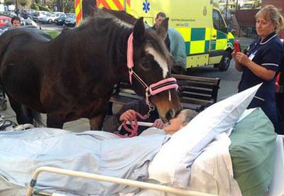 Horse gives kiss to dying woman