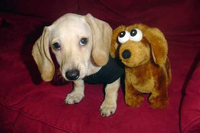 """Pics via <a href=""""http://www.buzzfeed.com/peggy/animals-with-stuffed-animals-of-themselves"""">Buzzfeed</a>"""