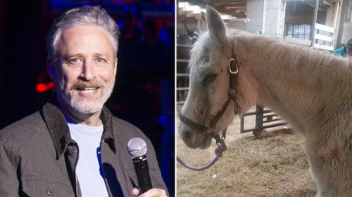 Comedian Jon Stewart adopts pony abandoned after owner shot it 130 times with paintballs