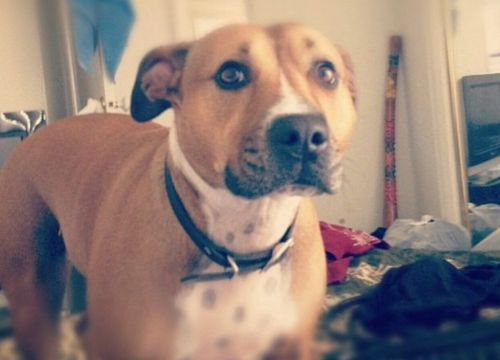 Roxy was found with gunshot wounds to her head. (9NEWS)